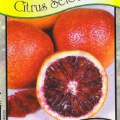 Blood Orange (Moro)